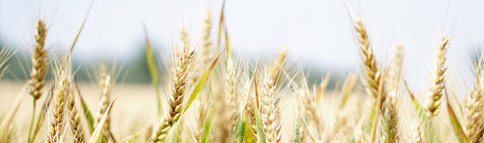 INFORMARE – Direcția pentru Agricultură Județeană Sibiu ! În atenția fermierilor și a conducerii asociaților de fermieri